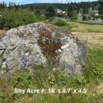 Shy Acre #3